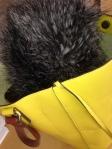 dead cat in bag